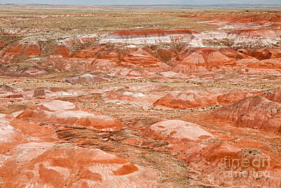 Photograph - Tawa Point Painted Desert Petrified Forest National Park by Fred Stearns