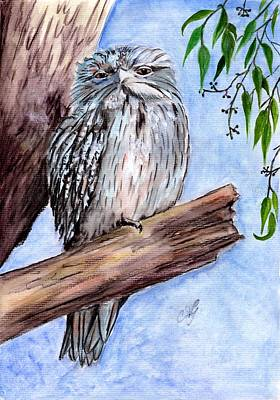 Painting - Tawny Frogmouth by Anne Gardner