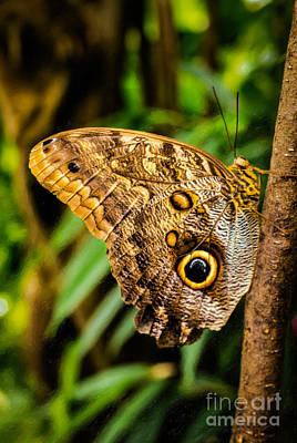 Tawny Owl Butterfly Original by Jon Burch Photography