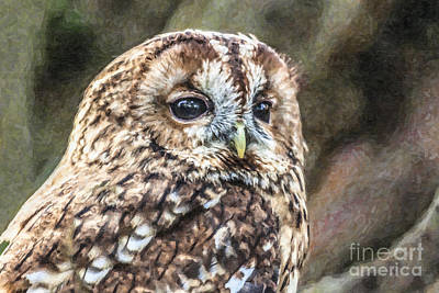 Bird Digital Art - Tawny Owl by Liz Leyden