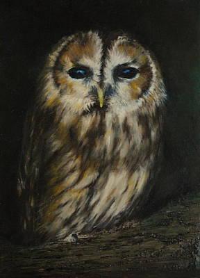 Painting - Tawny Owl by Lynn Hughes