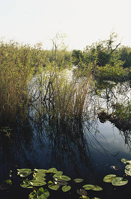 Photograph - Taylor Slough, Everglades by James Steinberg