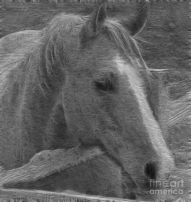 Photograph - Taz Quarter Horse Art Bw by Lesa Fine
