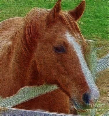 Farm Photograph - Taz Quarter Horse Art by Lesa Fine