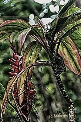 Digital Art - Tea leaves 1 by Charles Davis