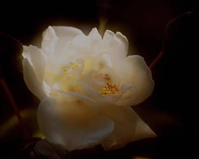 Photograph - Tea Lite Rose by TnBackroadsPhotos