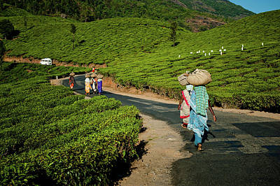 Kerala Photograph - Tea Pickers From Munnar by Ania Blazejewska