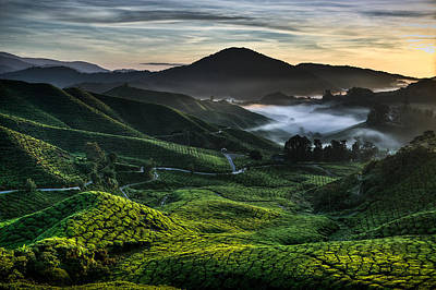Morning Mist Photograph - Tea Plantation At Dawn by Dave Bowman