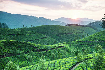 Kerala Photograph - Tea Plantation At Sunset, Kerala, India by John Harper