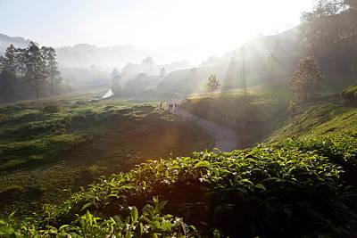 Tea Plantations And Road, Munnar Art Print by Peter Adams