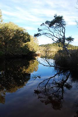 Photograph - Tea Tree Lake Reflections by Ankya Klay