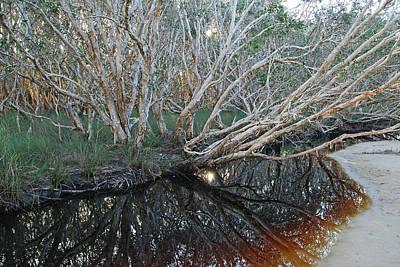 Photograph - Tea Tree Magic Lake by Ankya Klay