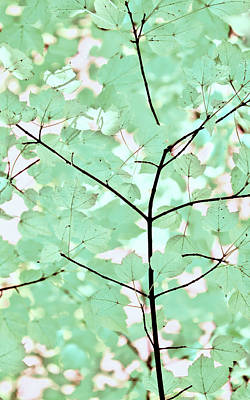 Photograph - Teal Greens Leaves Melody by Jennie Marie Schell