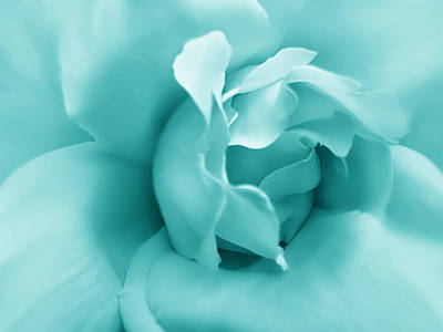 Photograph - Teal Rose Flower by Jennie Marie Schell
