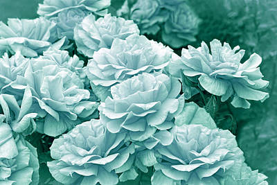 Photograph - Teal Roses In The Garden by Jennie Marie Schell