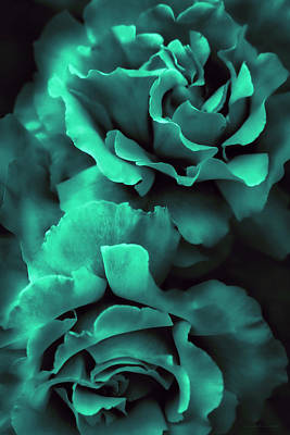 Photograph - Teal Green Roses by Jennie Marie Schell