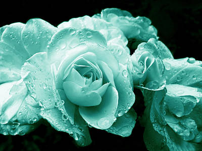 Photograph - Teal Roses With Raindrops  by Jennie Marie Schell