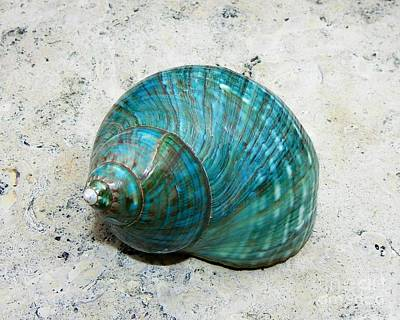 Photograph - Teal Turbo by Carolyn Bistline