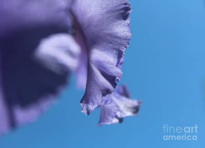 Photograph - Teardrop by Stacey Zimmerman