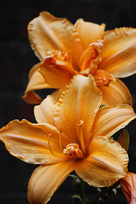 Technicoor Dreamcoat Daylily In Pastel Original by Suzanne Gaff