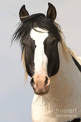 Photograph - Tecumseh by Deby Dixon