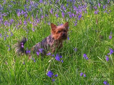 Photograph - Teddy Amongst The Bluebells by Joan-Violet Stretch
