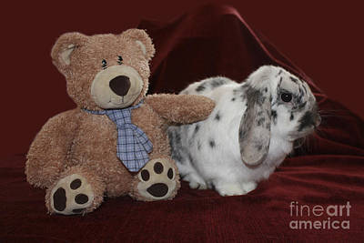 Photograph - Teddy Bear And Bunny Rabbit by Terri Waters