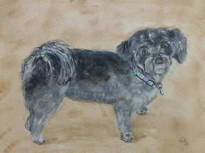 Painting - Maltese Puppy  by Kelly Mills