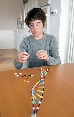 Teenager Building Dna Model Art Print by Lawrence Lawry