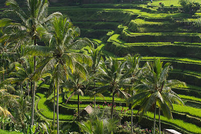Fun Patterns - Tegalalang Rice Terraces #3 by Shauna Milton