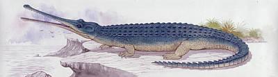 Paleozoology Photograph - Teleosaurus Prehistoric Crocodile by Deagostini/uig