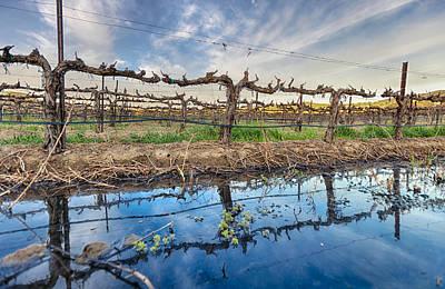 Blue Grapes Photograph - Temeculas Vintage Vines by Scott Campbell