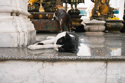 Photograph - Temple Cats by Dean Harte