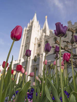 Salt Lake Temple Wall Art - Photograph - Temple Tulips by Chad Dutson