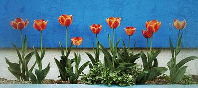 Photograph - Ten Tulips by Alan Toepfer