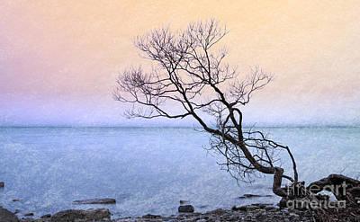 Photograph - Tenacity by Charline Xia