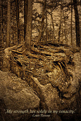 Photograph - Tenacity - Roots - Inspirational Quote by Nikolyn McDonald