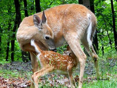 Nursing Deer Photograph - Tender Moment by Bruce Brandli
