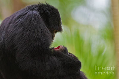 Caring Mother Photograph - Tender Moments by Ashley Vincent