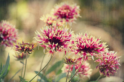Photograph - Tender Pink Blooms by Melanie Lankford Photography