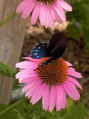 Blue Swallowtail Digital Art - Sweet  Succulence by Valerie Haggett Mullins