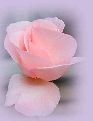 Pastel Photograph - Tenderness Of A Rose by The Art Of Marilyn Ridoutt-Greene