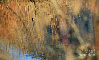 Photograph - Floating In The Abstract 1 by Michelle Twohig