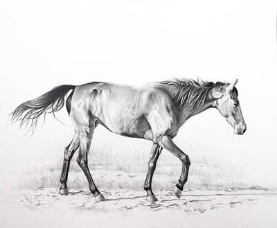Bay Horse Drawing - Tennessee Walking Horse by Karen Broemmelsick