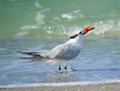 State Love Nancy Ingersoll - Tern Around Is Fair Play by Patricia Twardzik