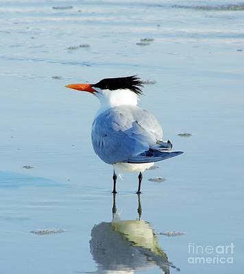 Photograph - Tern Reflection by D Hackett