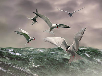 Painting - Terns Feasting At Sea by IM Spadecaller