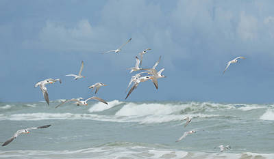 Photograph - Terns In Flight by rd Erickson