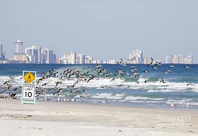 Terns On The Move Art Print