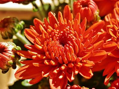 Photograph - Terra Cotta Mums by VLee Watson